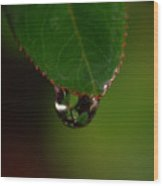 Dew Drop In Wood Print