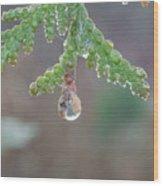 Dew Drop Wood Print