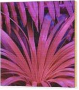 Dew Drop Pink Wood Print