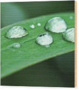 Dew Drops On A Blade Of Grass Wood Print
