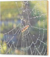 Dew Drops On A Spider Web Wood Print