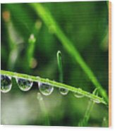Dew Drops On Blade Of Grass Wood Print