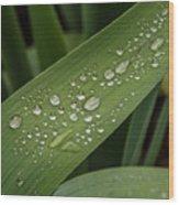 Dew Drops On Leaf Wood Print