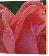 Dew Drops On Rose Wood Print