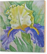 Dew Drops Upon Iris.2007 Wood Print
