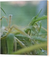 Dew Grass Wood Print