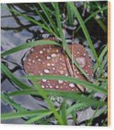 Dew It At The Creek Wood Print