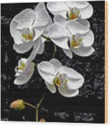 Dew-kissed Cascading Orchids Wood Print