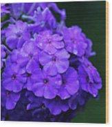 Dew Kissed Summer Phlox Wood Print