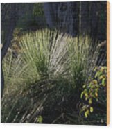 Dew On A Grass Tree Wood Print
