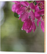 Dew On Blossoms Wood Print