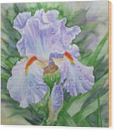 Dew On Light Blue Iris. Wood Print