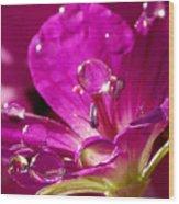 Dew On Pink Wood Print