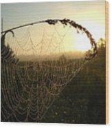 Dew On Spider Web At Sunrise Wood Print