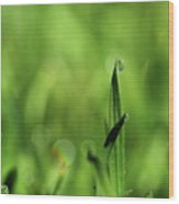 Dew On The Grass Wood Print