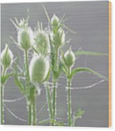 Dew On Thistles 3 Wood Print