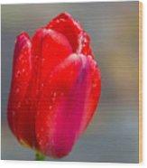 Dew On Tulip Wood Print