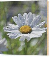 Dewdrop Daisy Wood Print
