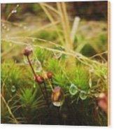 Dewdrop Fairyland Wood Print