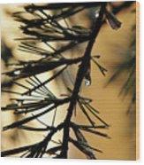 Dewdrop Wood Print