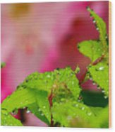 Dewdrops And Pastels Wood Print