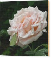 Dewdrops On A Rose Wood Print