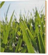 Dewdrops On New Wheat Wood Print