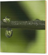 Dews Of Life Wood Print