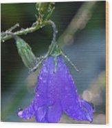 Dewy Bluebell Wood Print