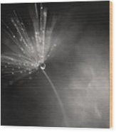 Dewy Dandelion Fireworks Wood Print
