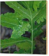 Dewy Ferns Wood Print