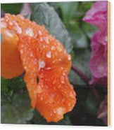 Dewy Pansy 2 - Side View Wood Print