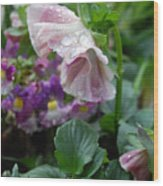 Dewy Pansy 4 Wood Print
