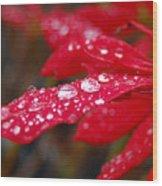 Dewy Petals Wood Print