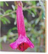 Dewy Red Bloom Wood Print