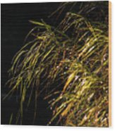 Dewy River Grass Wood Print