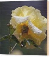 Dewy Yellow Rose 1 Wood Print