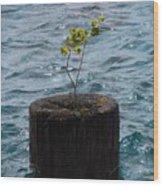 Pic Abv Wood Print