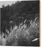 Diagonal Grasses Wood Print