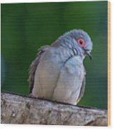 Diamond Dove Wood Print