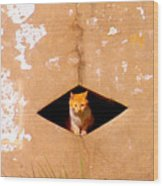 Diamond Kitty Wood Print