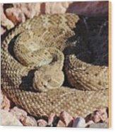 Diamondback Rattlesnake 062414f Wood Print