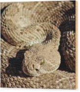 Diamondback Rattlesnake Close-up 062414a Wood Print
