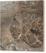Diamondback Rattlesnake Wood Print