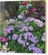 Dianthus Flower Bed Wood Print