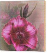 Dianthus Flower IIi Wood Print