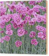 Dianthus Gold Dust Flowers Wood Print