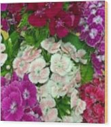 Dianthus Group  Wood Print