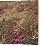 Diapensia And Lapland Rosebay Wood Print