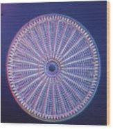 Diatom - Arachnoidiscus Ehrenberi Wood Print